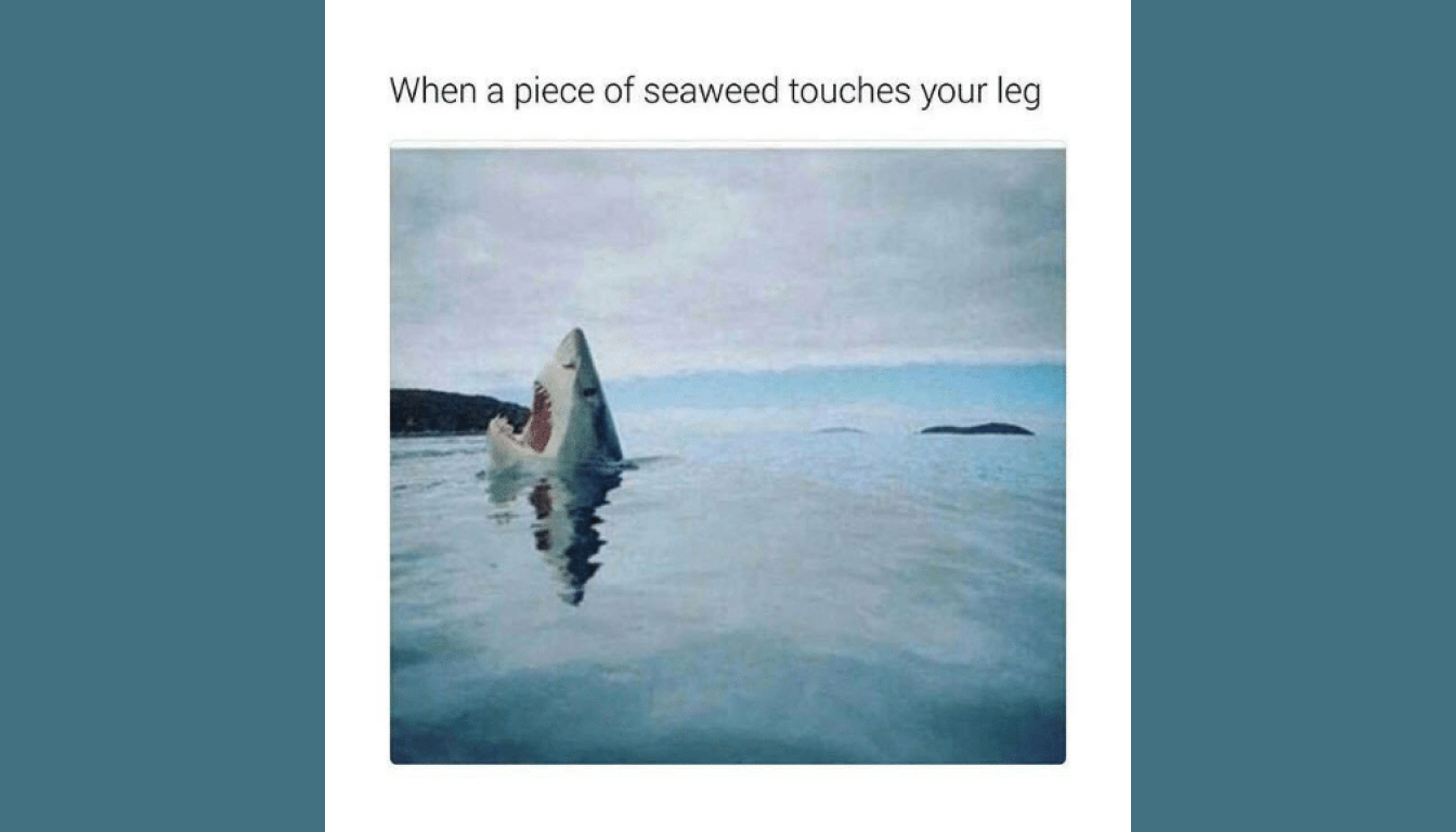 Seaweed meme described in the episode.