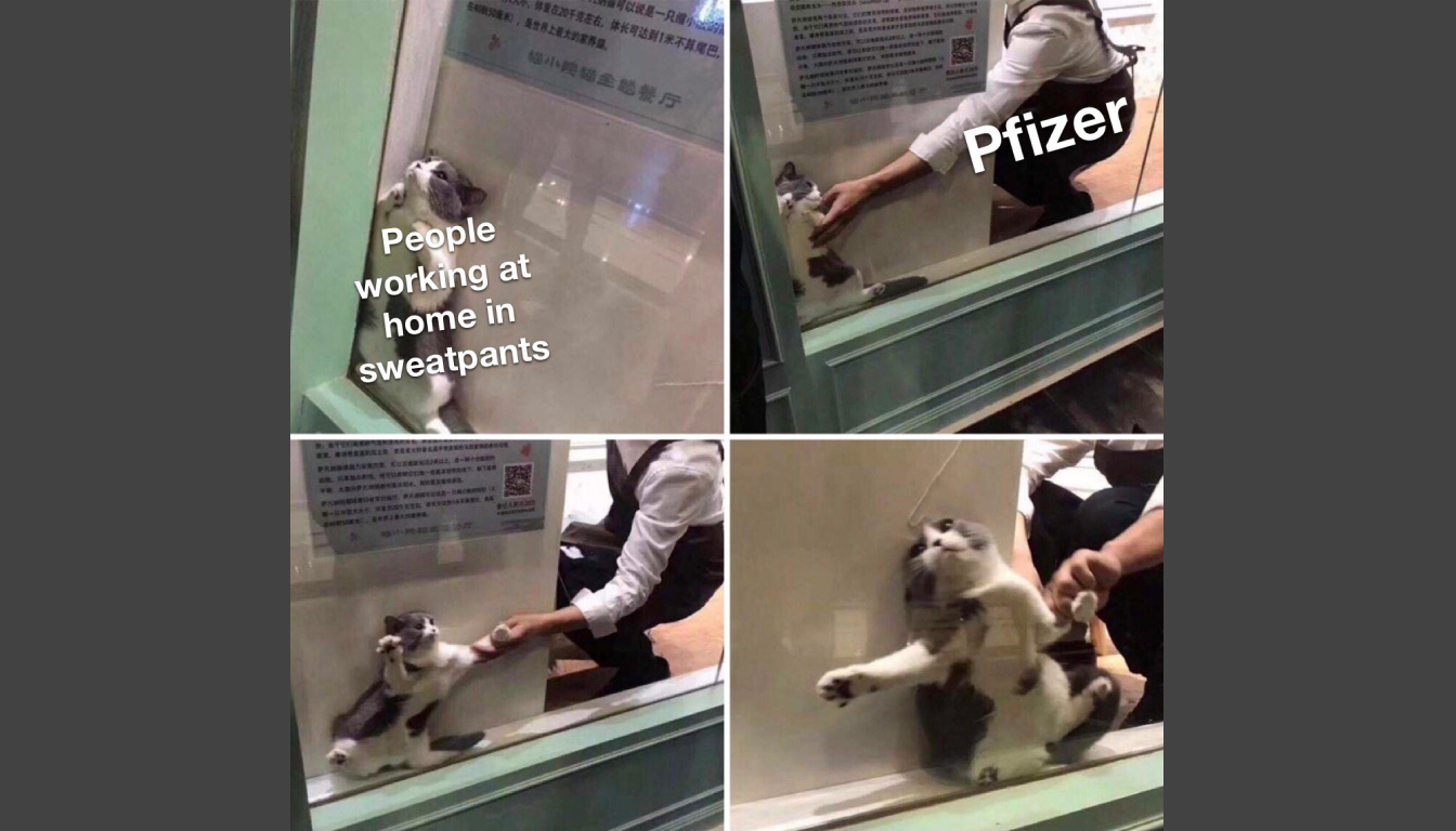 The Pfizer meme described in the episode.