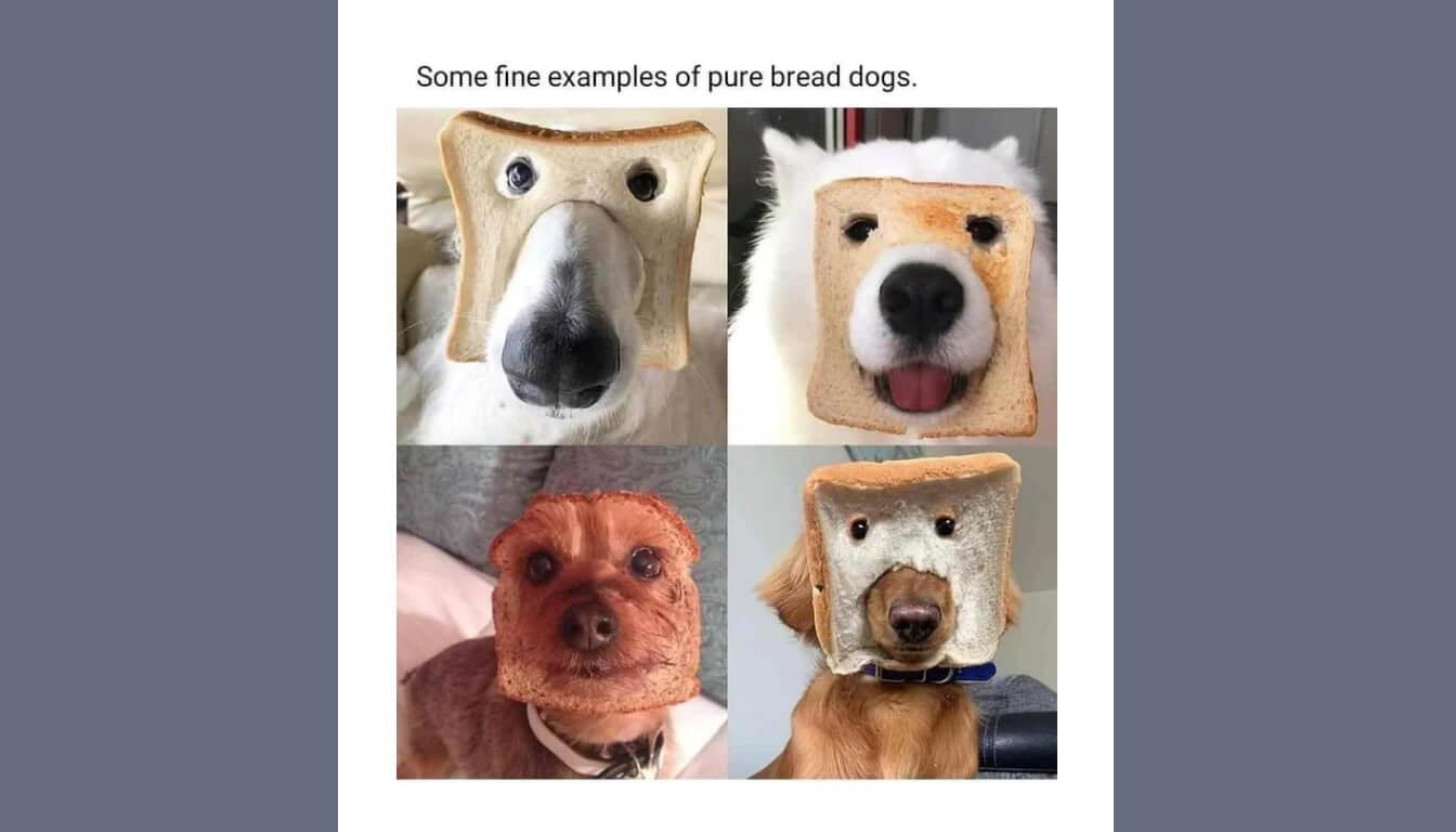 Pure bread dog meme described in the episode.